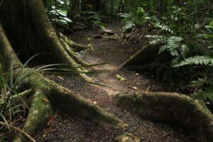 skoven - shelter