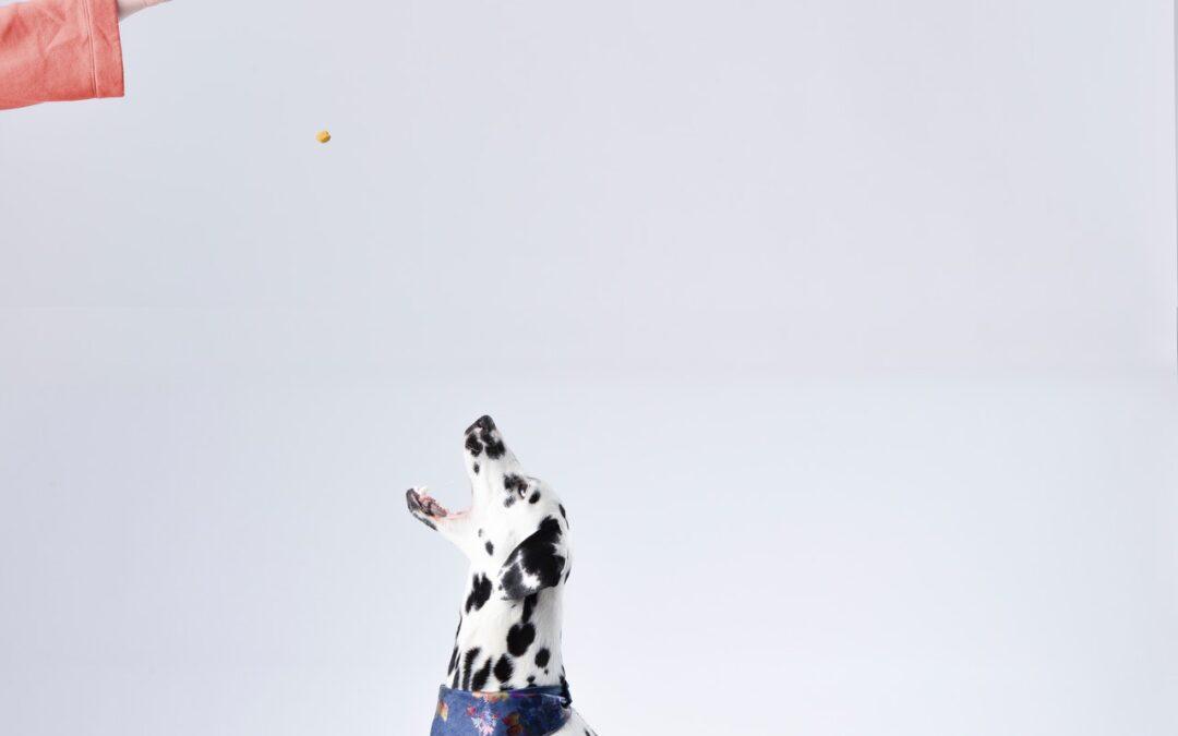 Prøv et hundefoder som din hund med garanti vil kunne lide