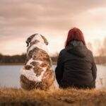 hund-familie