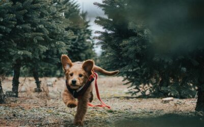 Træn med din hund – den skal også i form