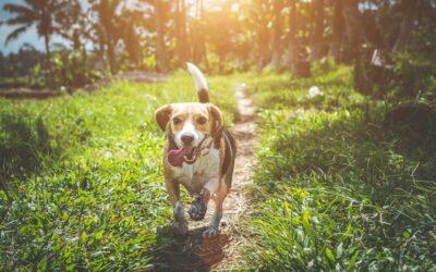 Slå to fluer med ét smæk: Tag hunden med på løbeturen